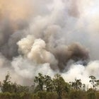 Australia is Burning: Bushfire Relief