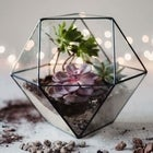 Terrarium Workshop @ POP Wilder 12pm