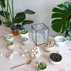 Mother's Day Terrarium Workshop 1PM